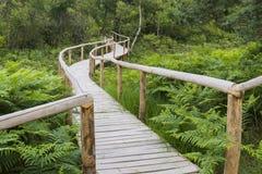 Sentiero per pedoni di legno Fotografia Stock Libera da Diritti
