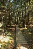 Sentiero per pedoni di legno attraverso l'IBM Moorland in Austria settentrionale, in autunno in anticipo immagine stock