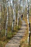 Sentiero per pedoni di legno attraverso l'IBM Moorland in Austria settentrionale, in autunno in anticipo immagini stock libere da diritti