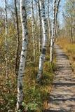 Sentiero per pedoni di legno attraverso l'IBM Moorland in Austria settentrionale, in autunno in anticipo fotografie stock libere da diritti