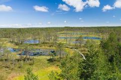 Sentiero per pedoni di legno della palude di Viru, Estonia fotografie stock
