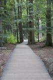 Sentiero per pedoni di legno nella foresta Fotografia Stock Libera da Diritti