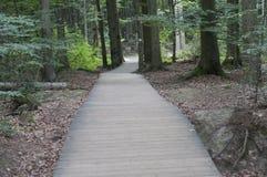 Sentiero per pedoni di legno nella foresta Immagini Stock Libere da Diritti
