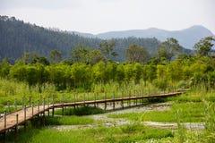 Sentiero per pedoni di legno sopra l'area umida Immagini Stock