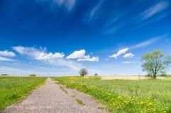 Sentiero per pedoni e cielo blu di sparizione di fioritura naturali del prato Fotografie Stock Libere da Diritti