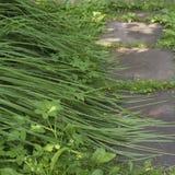Sentiero per pedoni e piante Immagine Stock
