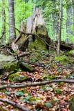 Sentiero per pedoni in foresta verde fotografia stock libera da diritti