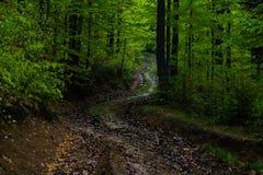 Sentiero per pedoni in foresta verde Fotografia Stock