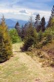 Sentiero per pedoni fra gli abeti nelle montagne Immagine Stock