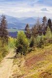 Sentiero per pedoni fra gli abeti nelle montagne Fotografia Stock Libera da Diritti