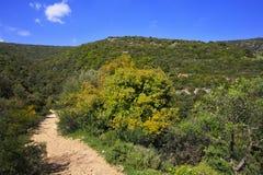 Sentiero per pedoni fra la natura della sorgente. Immagini Stock Libere da Diritti