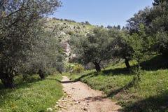 Sentiero per pedoni fra la natura della sorgente. Fotografia Stock