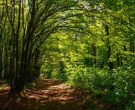 Sentiero per pedoni in legno deciduo verde fra gli alberi, freschezza della foresta della natura immagini stock