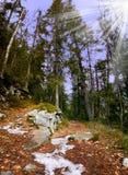 Sentiero per pedoni in legno della montagna in autunno immagine stock