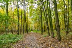 Sentiero per pedoni nel parco di Kuzminki, paesaggio di autunno Immagine Stock Libera da Diritti
