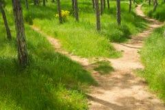 Sentiero per pedoni nel parco di primavera Immagini Stock