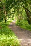 Sentiero per pedoni nella foresta Fotografia Stock Libera da Diritti