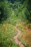 Sentiero per pedoni nella foresta Fotografie Stock