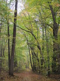 Sentiero per pedoni nella foresta Fotografia Stock
