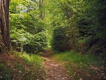 Sentiero per pedoni nella foresta assortita della molla verde fotografia stock