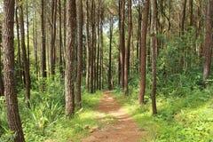 Sentiero per pedoni nella foresta di primavera Fotografia Stock
