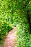 Sentiero per pedoni nella foresta di verde di estate Fotografia Stock