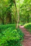 Sentiero per pedoni nella foresta di verde di estate Immagini Stock