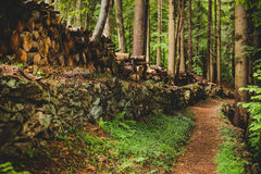 Sentiero per pedoni nella foresta nelle alpi Italia di un giorno piovoso Fotografie Stock