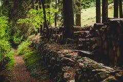 Sentiero per pedoni nella foresta nelle alpi Italia di un giorno piovoso Fotografia Stock Libera da Diritti