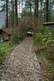 Sentiero per pedoni nella zona turistica della foresta di Kalilo del pinus del ‹del †del ‹del †in Kaligesing Purworejo, Indon immagine stock libera da diritti