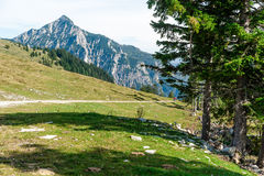 Sentiero per pedoni nelle alpi Fotografia Stock Libera da Diritti