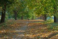 Sentiero per pedoni in parco coperto di foglie e di tronchi di albero caduti fotografie stock