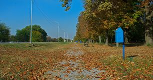 Sentiero per pedoni in parco coperto di foglie e di tronchi di albero caduti immagini stock libere da diritti