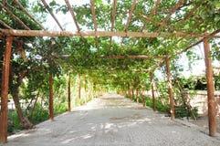 Sentiero per pedoni sotto la vite verde Fotografia Stock