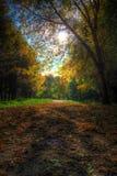 Sentiero per pedoni in un parco pittoresco di autunno di autunno Immagine Stock