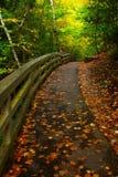 Sentiero per pedoni in una foresta di California in autunno Fotografie Stock Libere da Diritti
