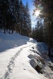 Sentiero per pedoni in una foresta nevosa fotografie stock libere da diritti