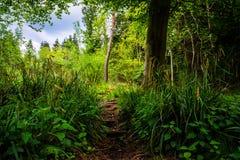 Sentiero per pedoni in una foresta - orizzontale Fotografia Stock