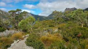 Sentiers de randonnée à la montagne de berceau en Tasmanie photographie stock libre de droits