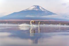 Sentiment blanc de cygne de couples romantique et amour aux WI de Yamanaka de lac Photos stock