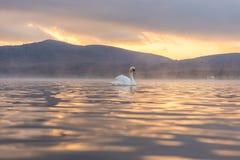 Sentiment blanc de cygne romantique et amour au lac Yamanaka avec le Mt Photos stock