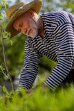 Sentimento aposentado cinzento-de cabelo farpado do homem envolvido em chapear árvores imagens de stock