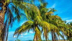 Sentimento da praia Fotografia de Stock