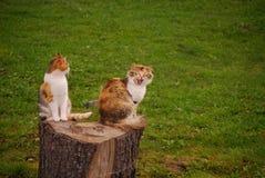 Sentimento in gatti Fotografie Stock
