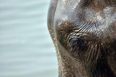 Sentiments des animaux Photographie stock