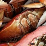 Sentindo um bocado Crabby fotografia de stock