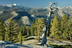 Sentinel Dome Evening, Yosemite. The hike up to Sentinel Dome in Yosemite National Park is very beautiful and very rewarding. The 360 degree views that can be Royalty Free Stock Image
