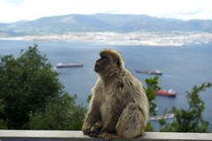Sentinel of Gibraltar Royalty Free Stock Image