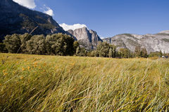 Sentinel Meadow in Yosemite Valley Stock Photo