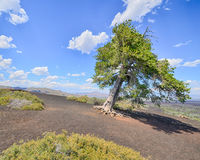 Free Sentinel Tree, Inferno Cone, Craters Of The Moon National Monument, ID Royalty Free Stock Image - 46588076
